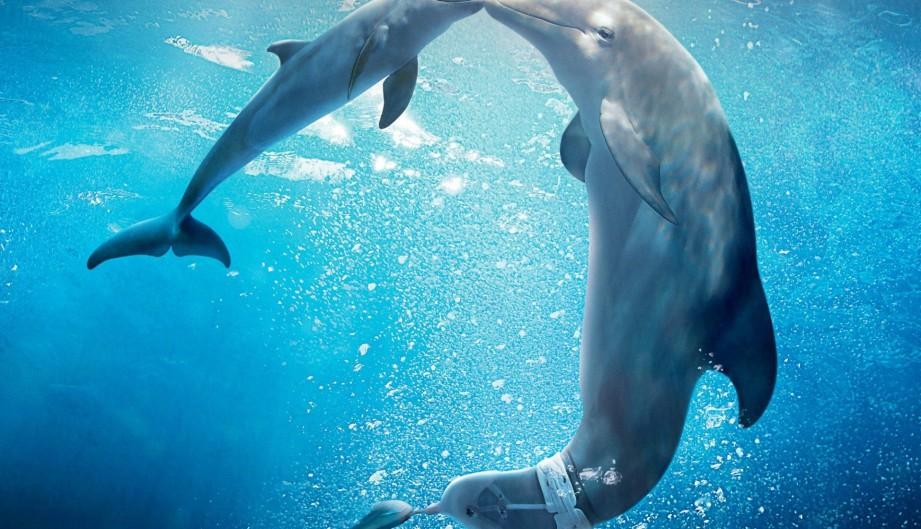 Winter, el delfín 2