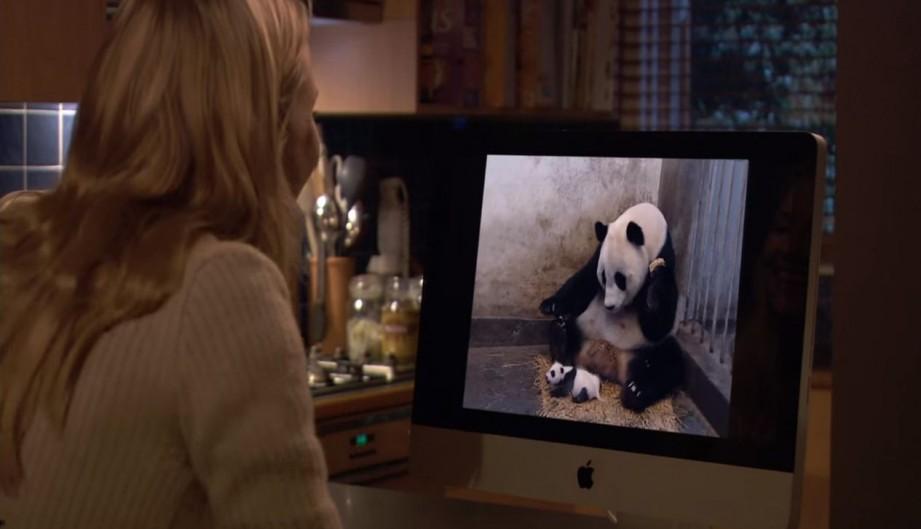Baby, el panda juguetón
