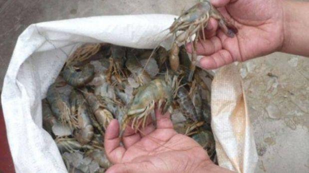 Más de 24 kilos de camarón de río fueron incautados por temporada de veda
