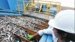 Baja producción de harina de pescado en Perú elevaría su precio - Noticias de diario el mercurio de chile