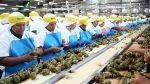 Agroexportaciones crecen 5% en primer trimestre, pese a Niño - Noticias de hong kong china