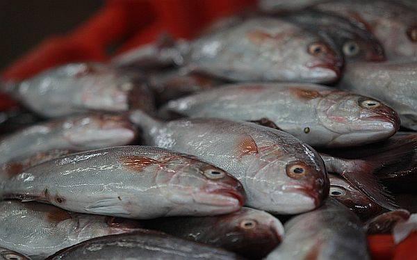 ÁDEX: las exportaciones pesqueras crecerían 22%