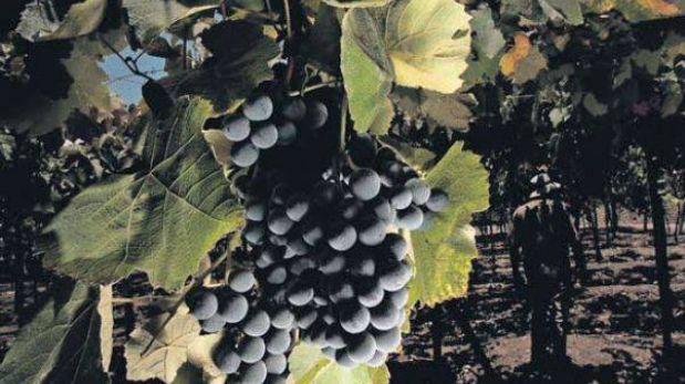 La Ruta del Pisco: un recorrido por viñedos y bodegas de Moquegua