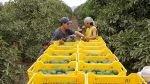 Expectativa de creación de empleo sigue positiva, dice Manpower - Noticias de marco nicoli