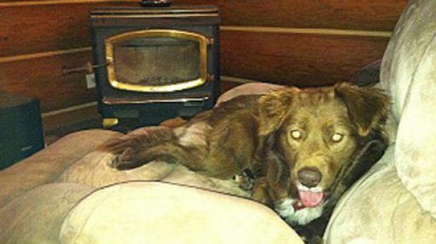 El perro callejero más caro del mundo