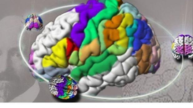 Crean el atlas del cerebro más detallado del mundo y en 3D