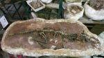 Arequipa: hallan fósil de feto de dinosaurio en provincia de Castilla - Noticias de manuel alpaca postigo