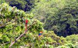 """Así se alista Costa Rica para liderar el """"turismo de reuniones"""""""
