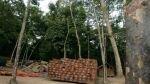 Reglamento de ley forestal atraerá recursos por US$10.000 mlls. - Noticias de aptitud