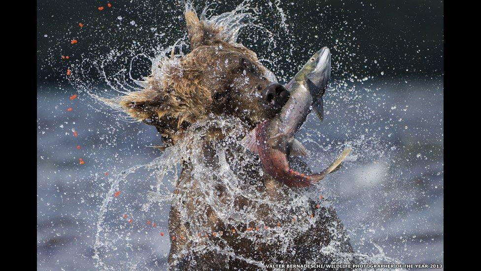 Las mejores imágenes de la naturaleza en 2013 [FOTOS]