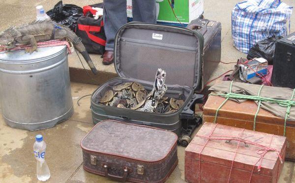 Piura: cientos de animales silvestres protegidos son vendidos ilegalmente