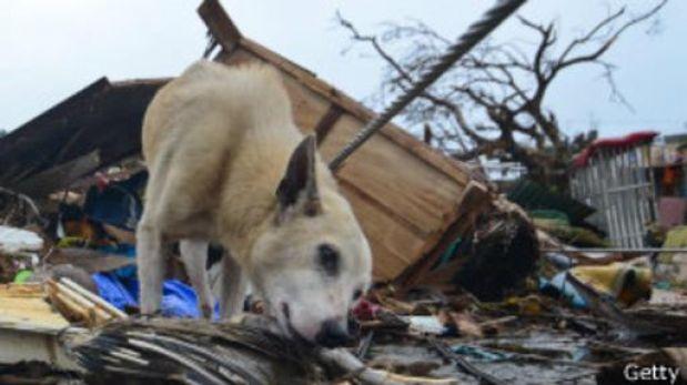 Cómo predicen los animales los desastres naturales? | Planeta