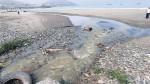 Chancay: 5 empresas pesqueras investigadas por moluscos varados - Noticias de pierina pighi bel