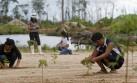 Inversión puede revertir deforestación de 2 millones de has.