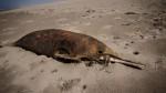 En una semana se sabrá por qué murieron 23 delfines en Sechura - Noticias de silvia rumiche
