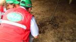 Pobladores de Naplo culpan a granja avícola por plaga de moscas - Noticias de difusióhn
