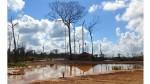 Los mineros artesanales de Tambopata quieren de nuevo su bosque - Noticias de minera escondida