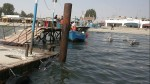 Paracas: incendio de bote turístico dejó cinco heridos - Noticias de vanessa lopez