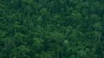 Pacific Rubiales confirma hallazgo de crudo ligero en Ucayali - Noticias de ronald pantin