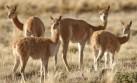 Fauna silvestre: 400 especies están en peligro en el Perú
