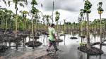 Agrobanco ayudará a clientes afectados por desastres naturales - Noticias de desastres naturales