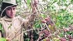Crisis en Cajamarca: recesión económica afecta al sector agro - Noticias de andres zelada