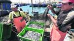 Harina de pescado se disparó a su nivel más alto en una década - Noticias de pesca de anchoveta