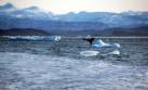 EE.UU. tendrá un representante especial en el Ártico
