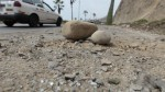 Costa Verde: Emape cubrirá gastos de víctima por caída de roca - Noticias de sota nadal