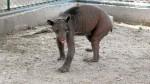 Piura no tiene recursos para cuidar animales rescatados - Noticias de kurt beer