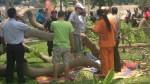 Parque Reducto N°2: caída de árbol dejó dos personas heridas - Noticias de jose luis sanchez catalan