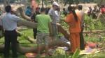 Relima evalúa causas de caída de árbol en Parque Reducto N°2 - Noticias de jose luis sanchez catalan