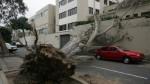 Caída de árboles: casos que generaron alarma en últimos años - Noticias de jose luis sanchez catalan