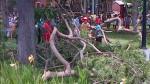 Caída de árbol en Parque Reducto pudo cobrar la vida de niña - Noticias de jose luis sanchez catalan