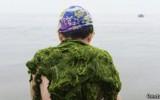 Las algas de la Patagonia como protagonistas de la cocina