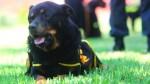 Murió Lay Fun: ícono de policía canina falleció a los 13 años - Noticias de olger benavides
