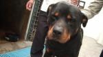 Lay Fun: La vida policial del ejemplar perro en imágenes - Noticias de paro cardiaco
