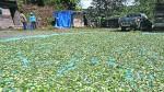 Realizarán acciones contra minería ilegal en selva de Puno - Noticias de flavio mirella