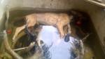 Maltrato animal: los últimos y más indignantes casos - Noticias de paita