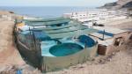 Dos delfines sobreviven en pésimas condiciones en Chorrillos - Noticias de carlos lau