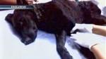 Denuncian que mototaxista quemó y arrolló a perro - Noticias de lorena orihuela