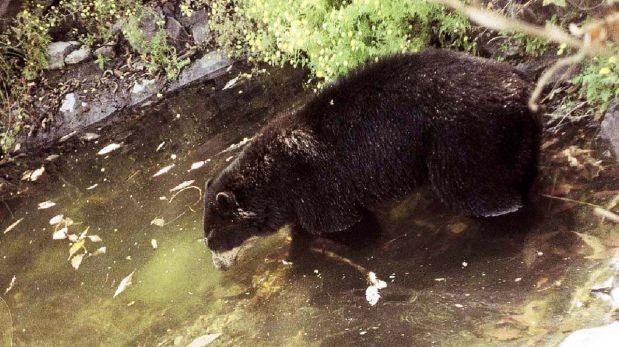 Chaparrí o los osos de Lambayeque