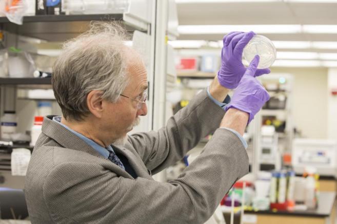 Jef Boeke fue el responsable del equipo de científicos a cargo de la investigación (Foto: Elmundo.es)