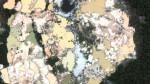 Estragos de la minería ilegal pueden verse desde el espacio - Noticias de juan leon almenara