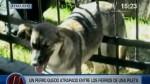 Bomberos y policías rescataron a perrita atrapada entre fierros - Noticias de grupo fierro
