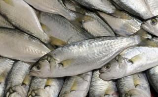 Semana Santa: conoce dónde comprar pescado barato en estos días