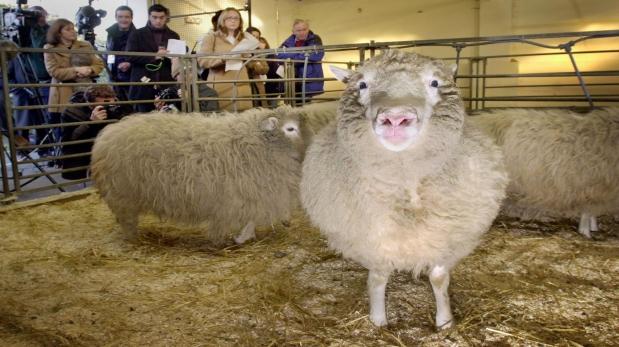 Oveja Dolly (Foto: AP)
