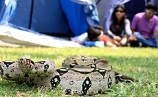 Región Loreto encabeza casos de mordedura de serpiente el 2014