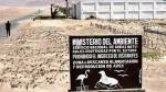 Reserva de Paracas en riesgo por proyecto inmobiliario - Noticias de jose moquillaza