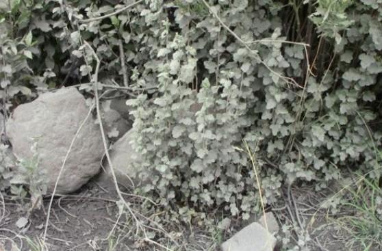 Volcán Ubinas: así son las explosiones y emisiones de ceniza